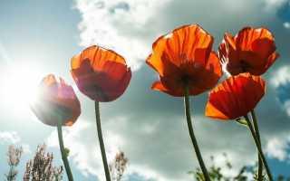 Важные праздники в мае в 2021 году: церковные и государственные